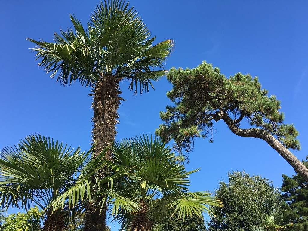 Palmiers du Parc Mauresque Arcachon