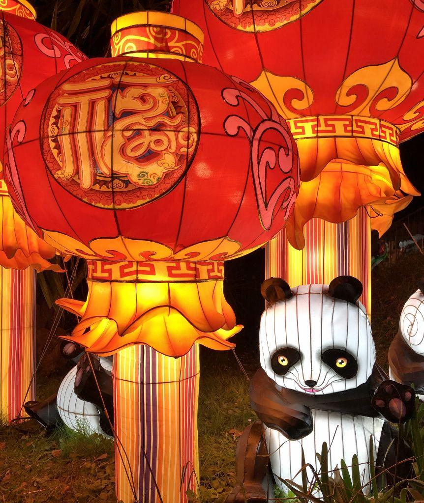 Baie des lumières pandas et poissons