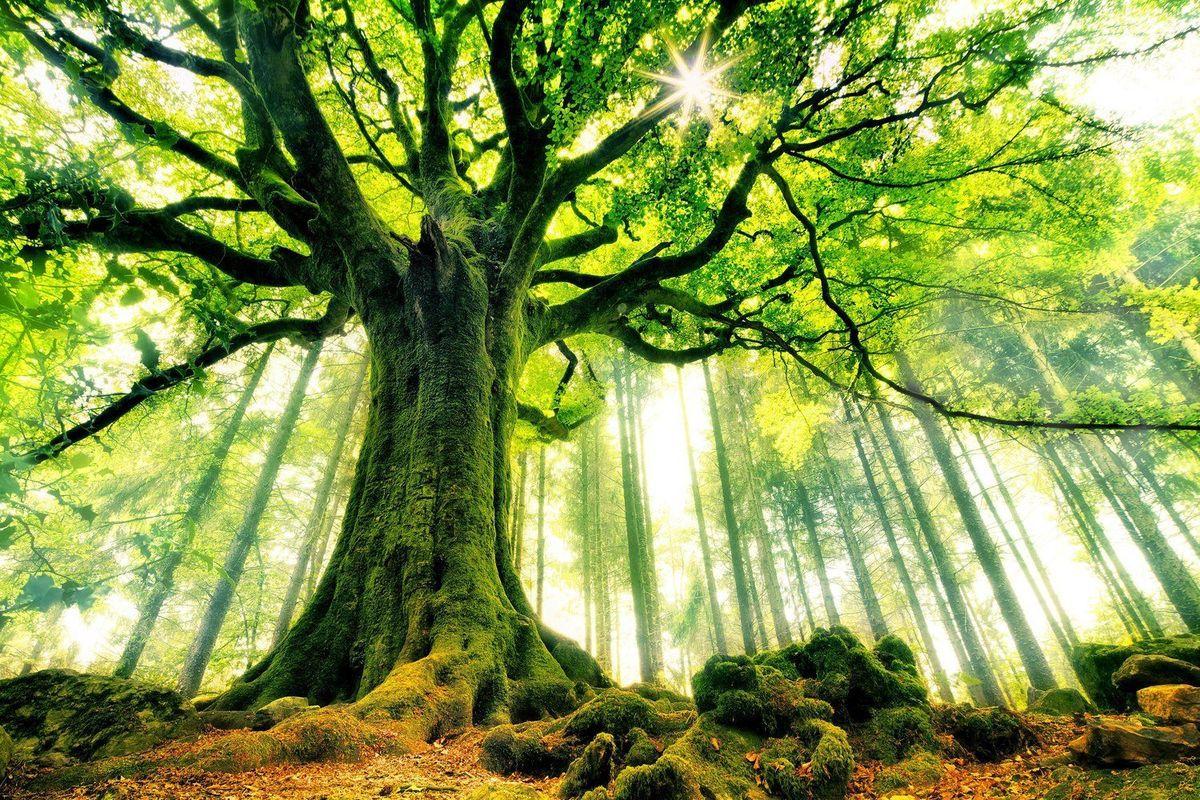 La Sylvothérapie la santé par les arbres