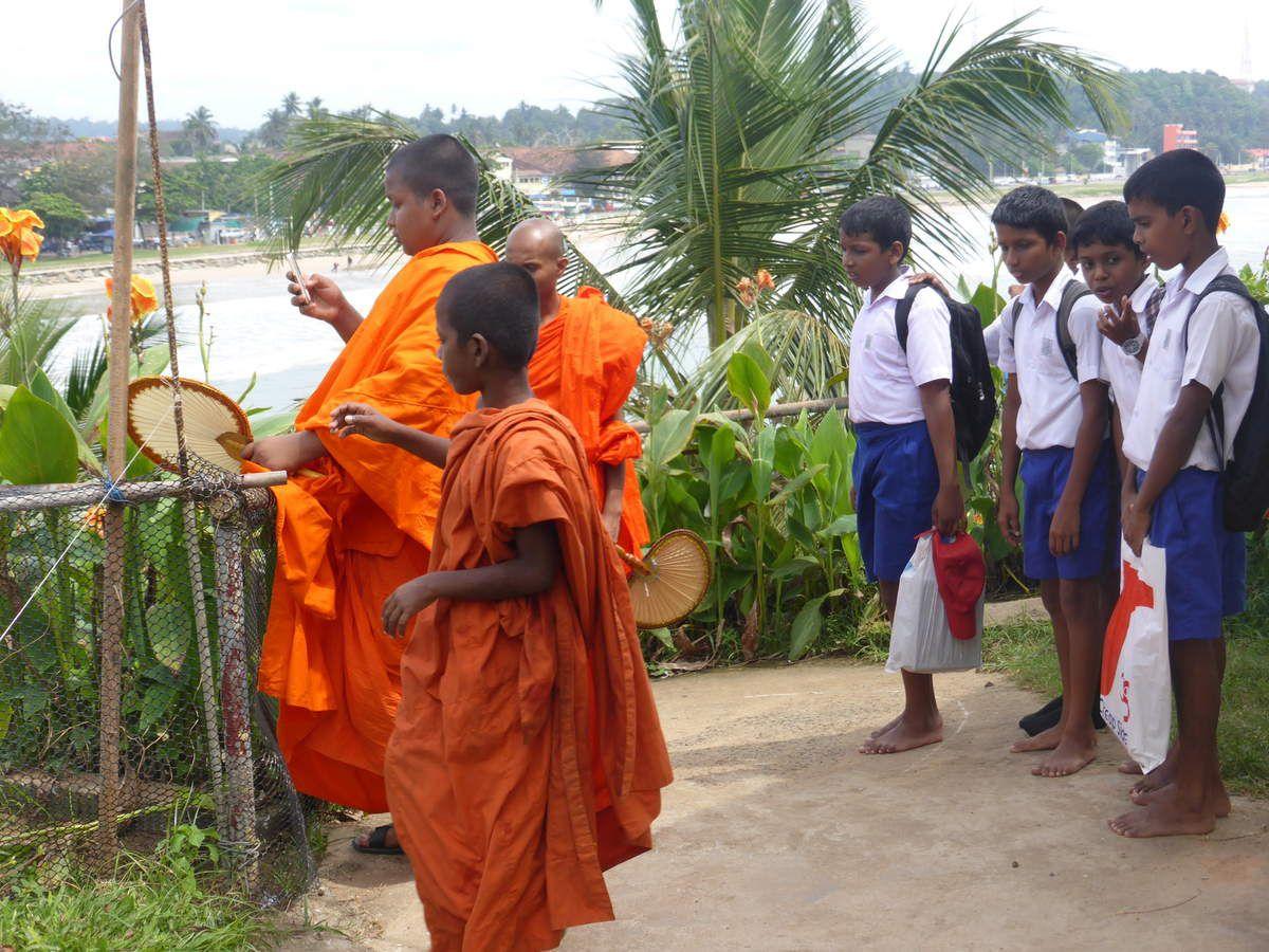 Scènes quotidiennes (le paon est en liberté dans les rizières. Il est le symbole du Sri Lanka)
