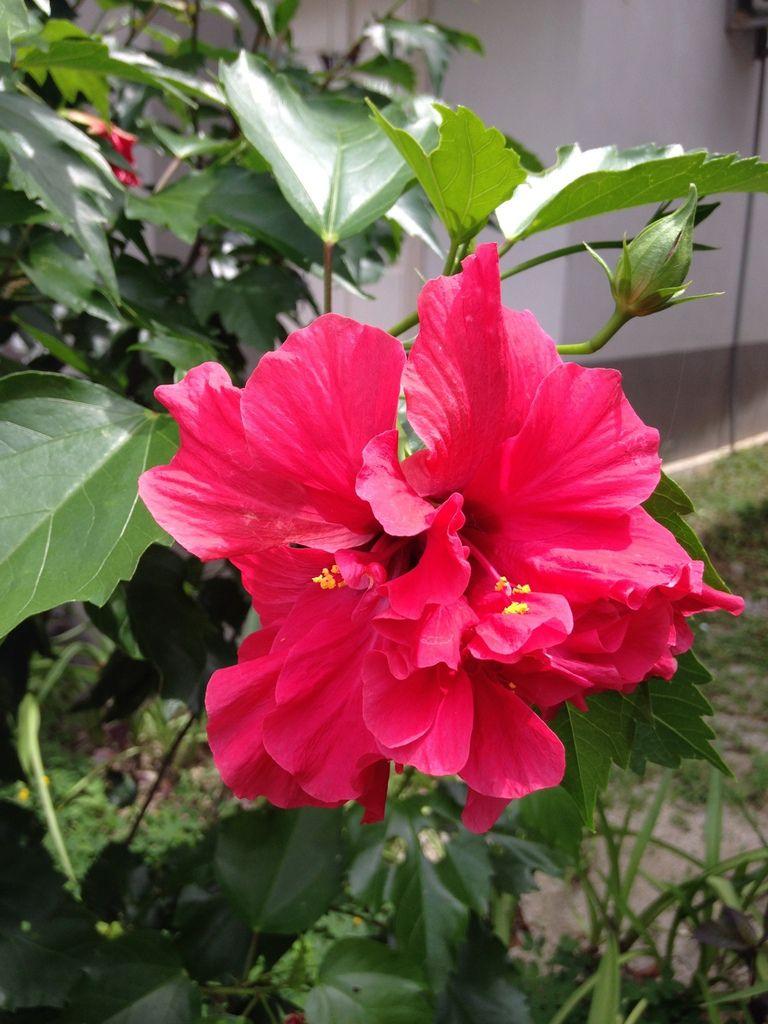 Allez, vive le 14 juillet !! feux d'artifice en fleurs : oh la belle rouge ! oh la belle jaune !