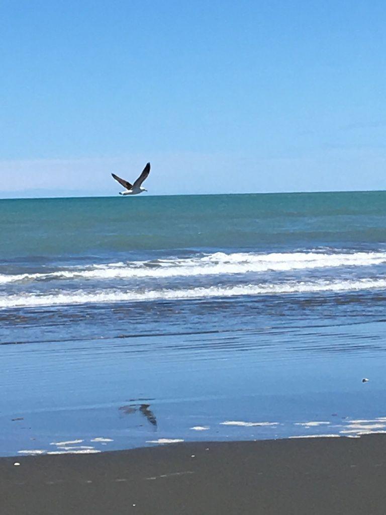 "Christchurch, ""garden city"", Antartica Center et les plages immenses de Sunmer et New Brighton"