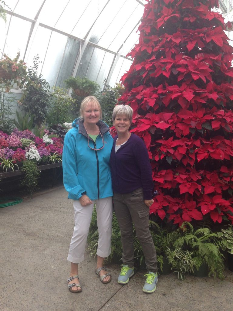 Christmas and Summer holiday in Christchurch : JOYEUX NOËL 🎄