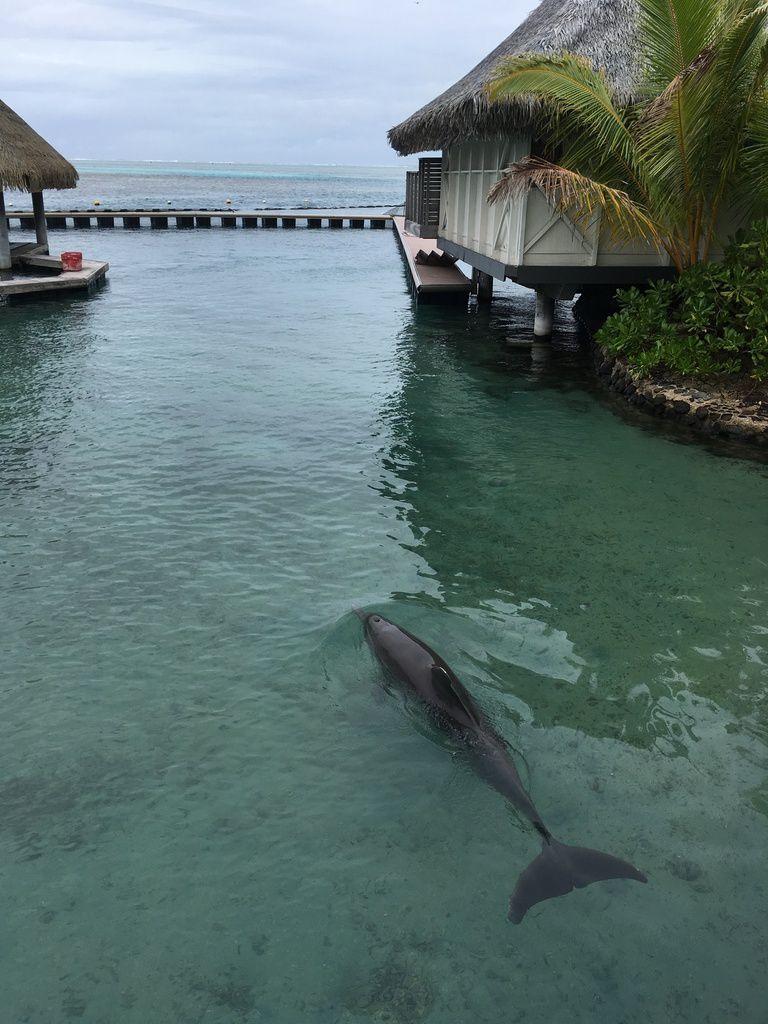 1ère sortie à l'Intercontinental, au Tiki village et restaurant avec four tahitien sur la côte ouest