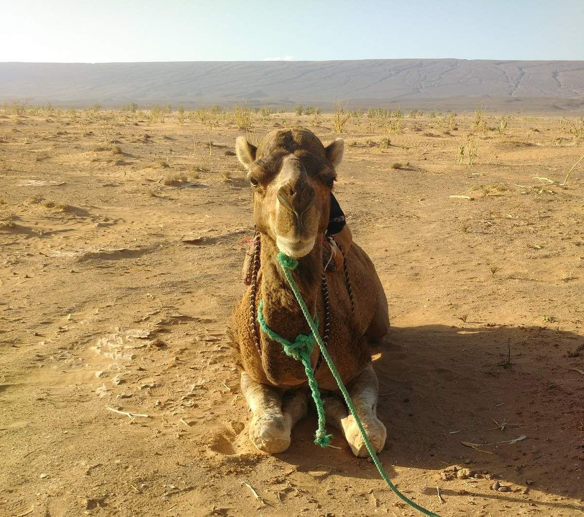 La princesse du désert