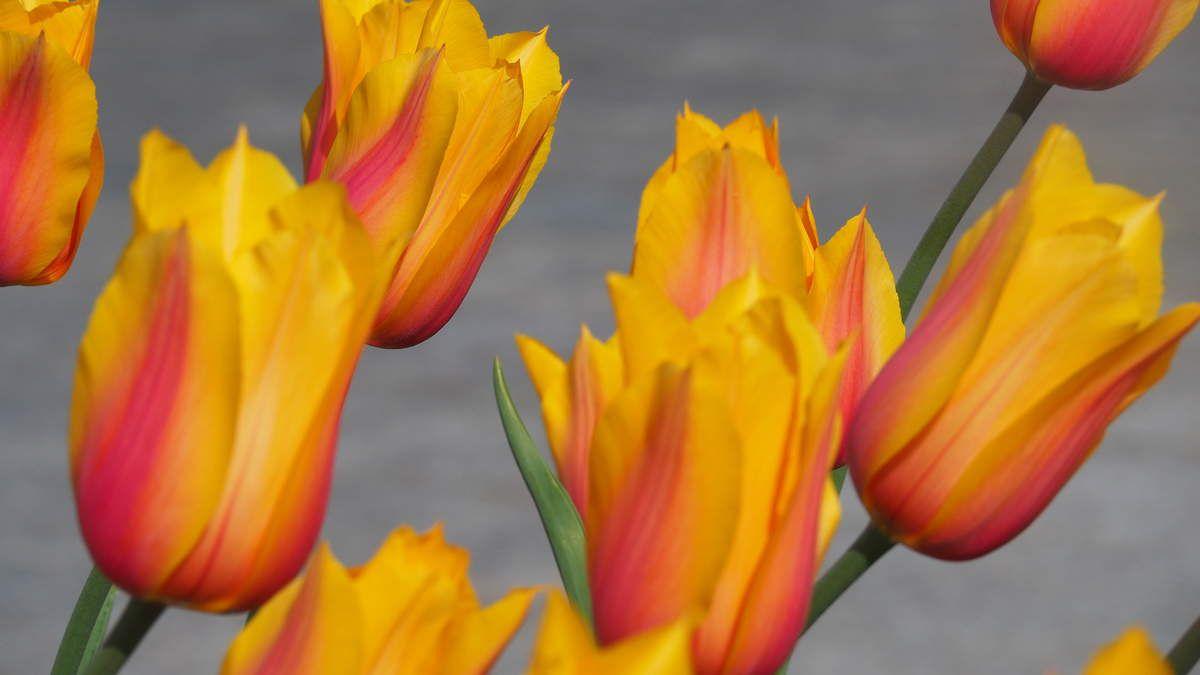 Les quais fleuris