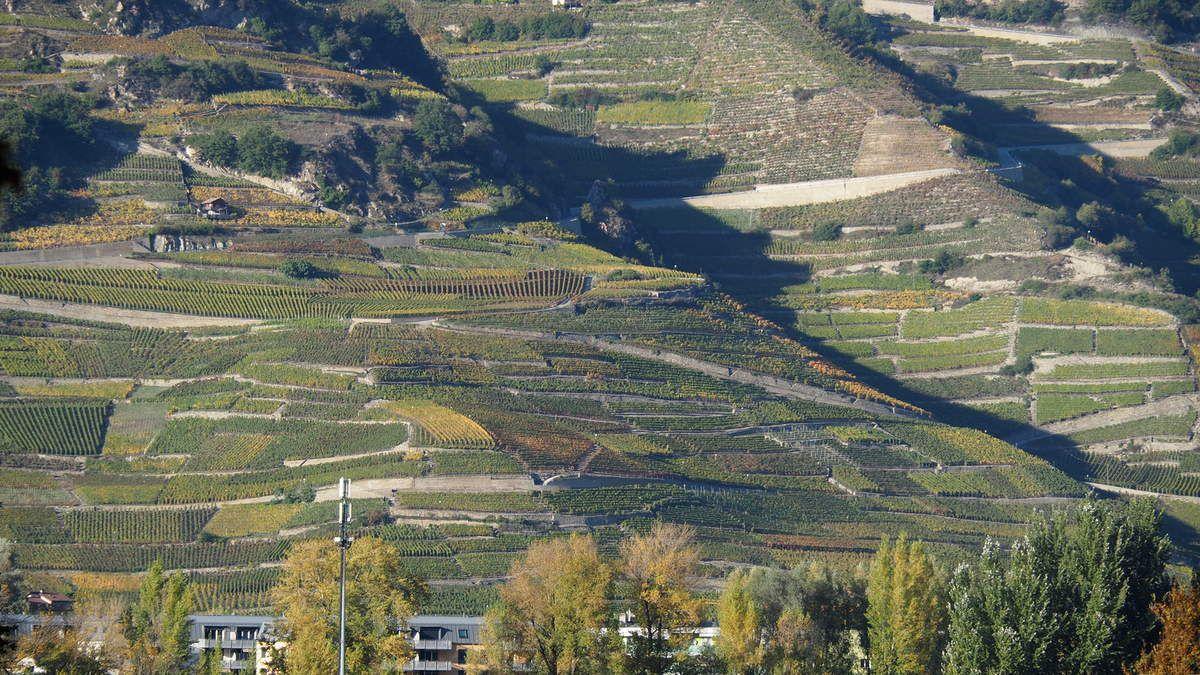 Les vignobles du Valais