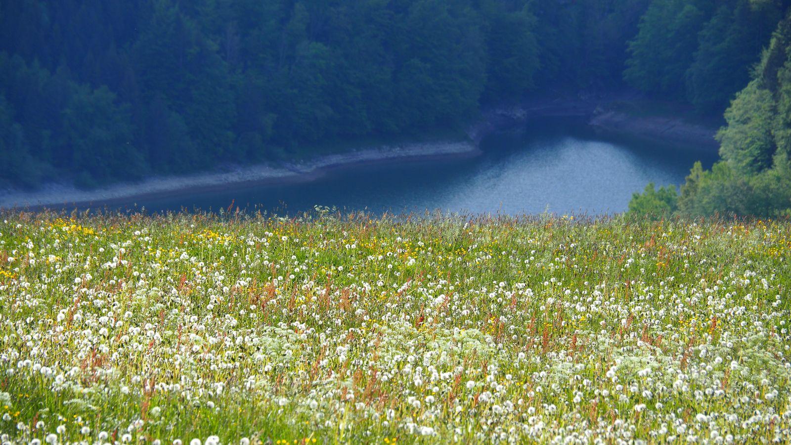 Retrouver la nature et les grands espaces