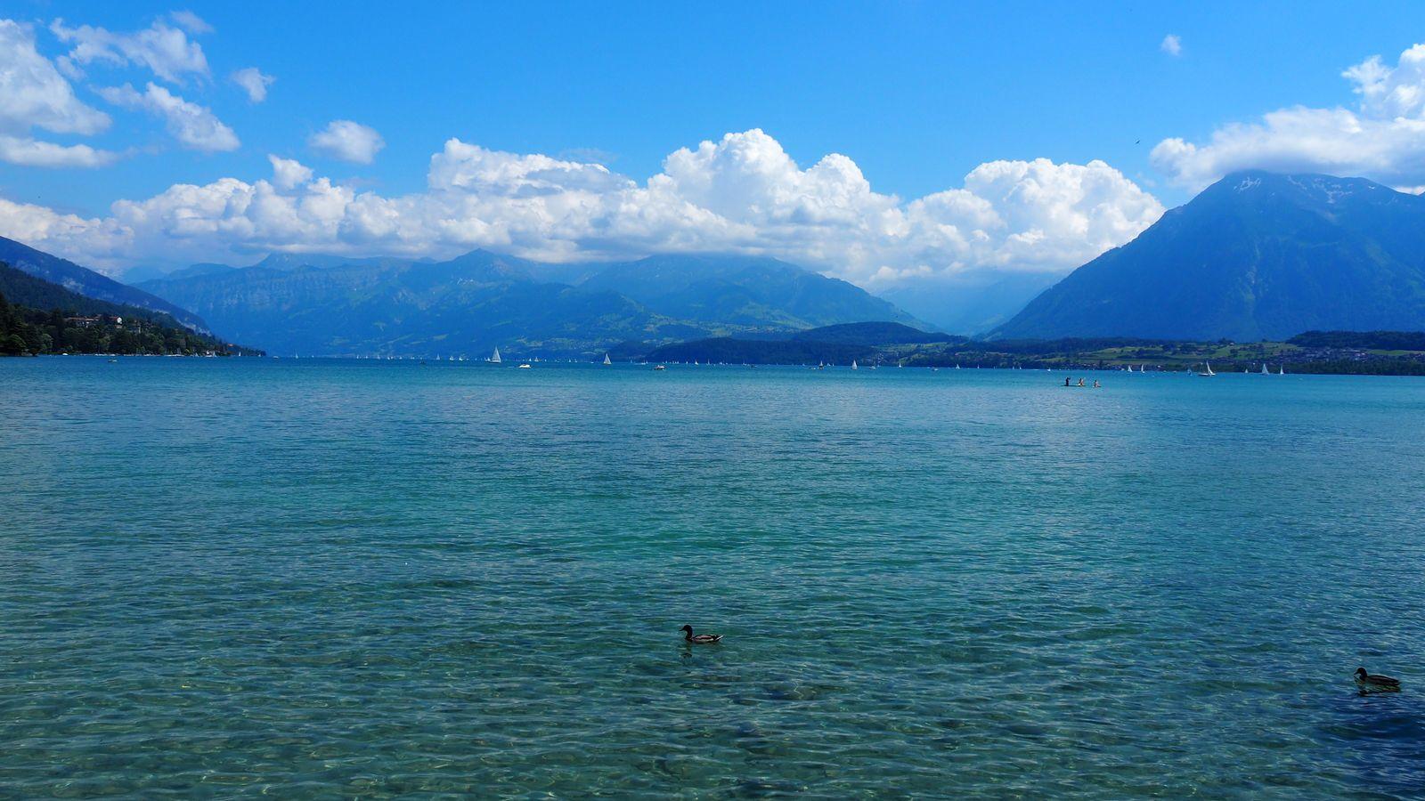 Le lac de Thoune