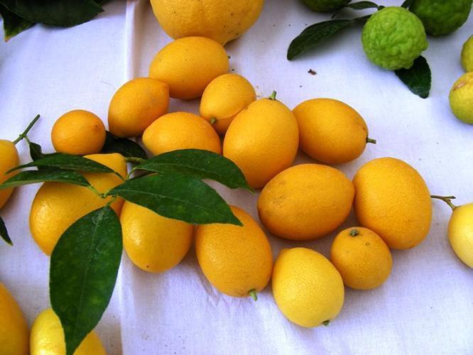 Limequat (photo prise sur le net)