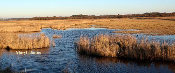 Le marais de Pen Mané dore au soleil d'hiver.