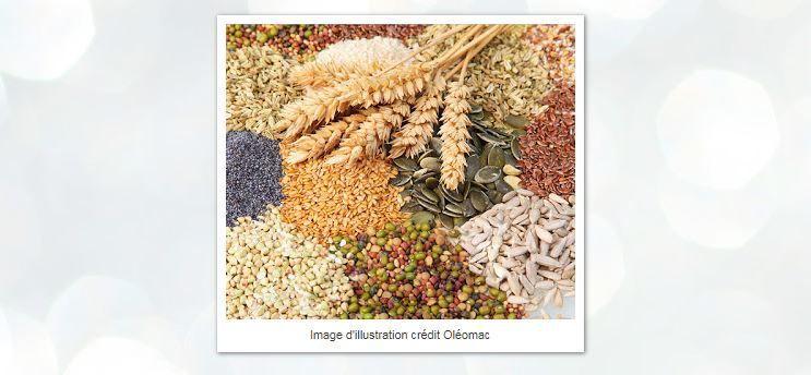 Galettes légumes trio de quinoa