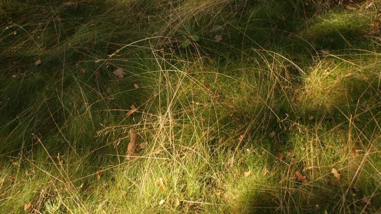 herbes folles par la polonaise ANNA EM