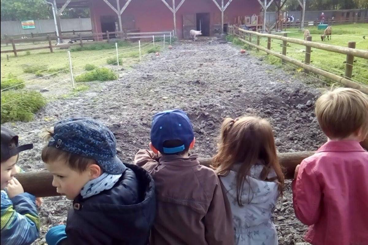 Ferme pédagogique: fabrication de pains, visite de la ferme , promenade en calèche