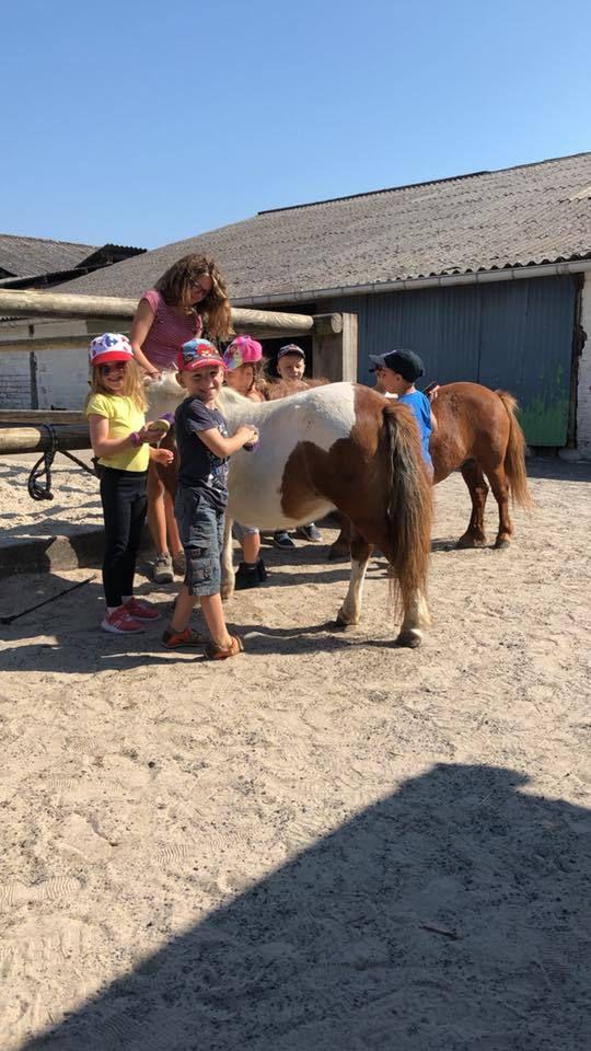 Pique-Nique, Visite de la ferme, des écuries, pansage et exercices d'équilibre et de voltige ! Quelle journée !