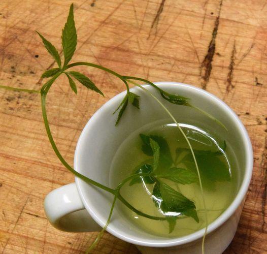 Jiaogulan : la plante d'immortalité