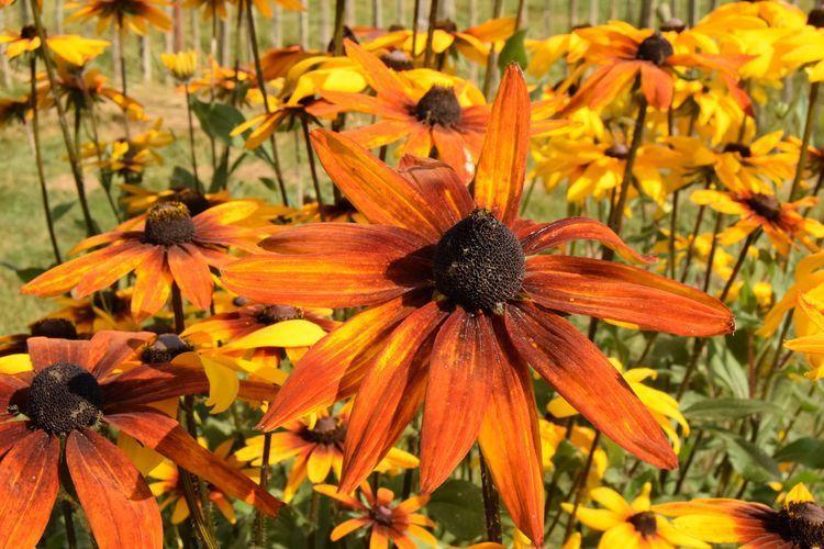 De bien jolies couleurs pour l'automne, mais aussi pour le printemps et l'été