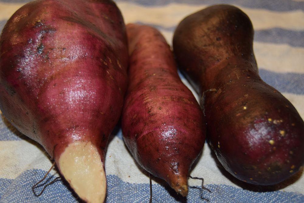 yacon ou poire de terre morado