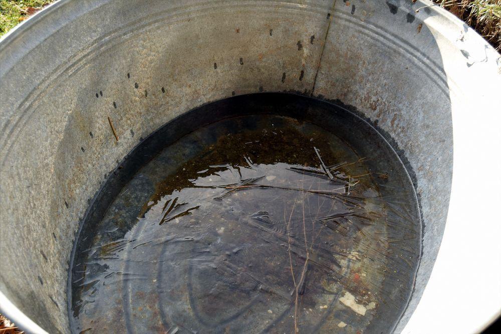 Dans la bassine en zinc qui me sert de réserve d'eau pour la serre, la surface est couverte d'une pellicule de glace