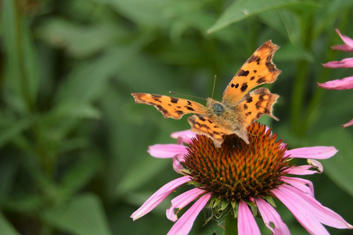 Des fleurs un peu partout...et des papillons