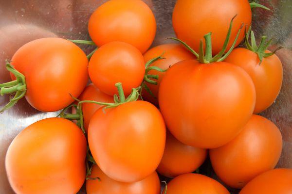 Pour être orange, elle est orange !