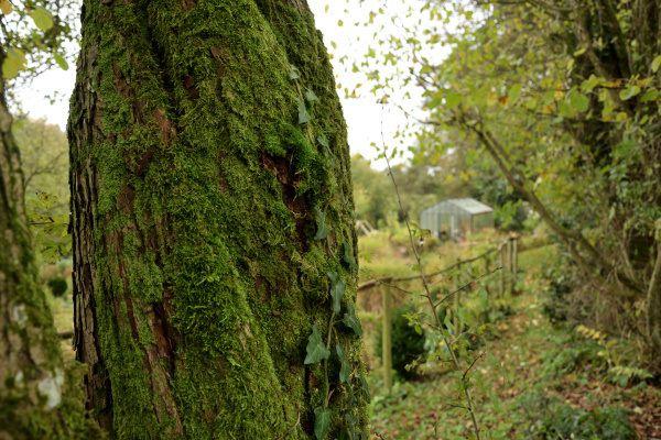 De la mousse et des lichens recouvrent les plus vieux troncs : les oiseaux y trouvent de la nourriture et des matériaux pour construire leur nid.