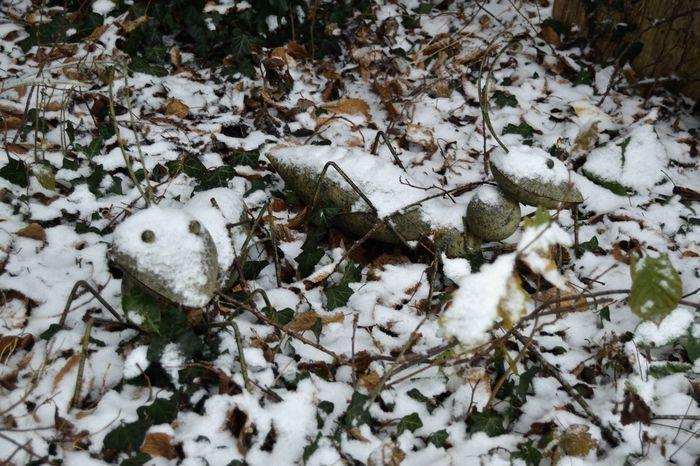 Premières neiges : le jardin se repose