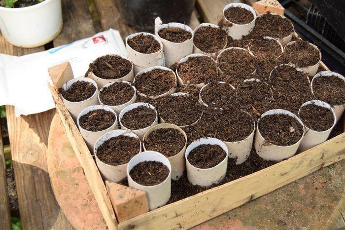 Ensuite, vers la mi-avril, les remplir de bon terreau