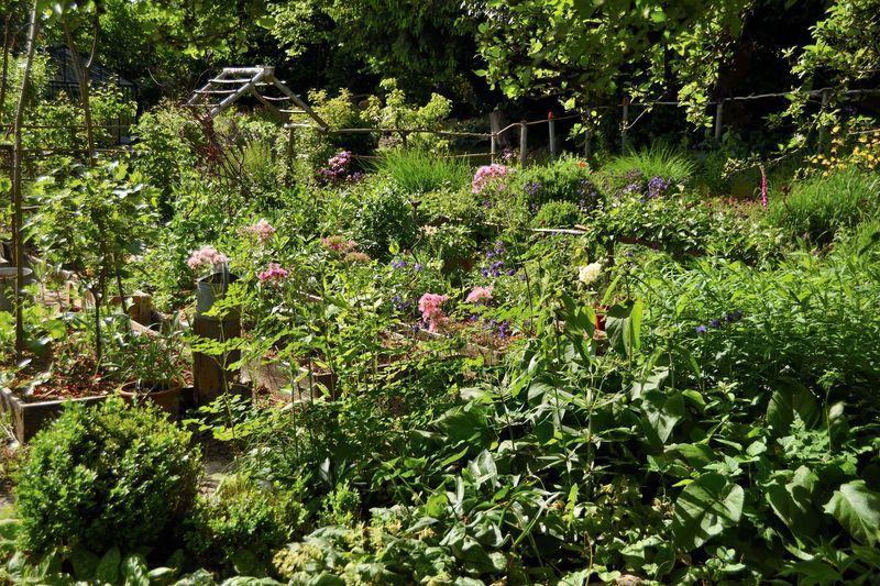 Dans d'autres coins, ce sont les thalictrums aquilegifolia qui se faufilent entre les plantations. J'aime beaucoup leurs inflorescences nuageuses.