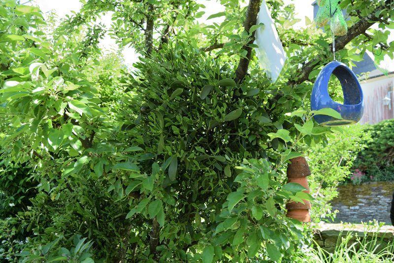 Jardins naturels ouverts à Bouillon : le jardin d'Anne et Marc