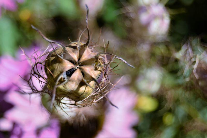 Où tomberont-elles ces petites graines de nigelle ? Si toutes les conditions sont réunies, elles germeront. Sinon, elles attendront.