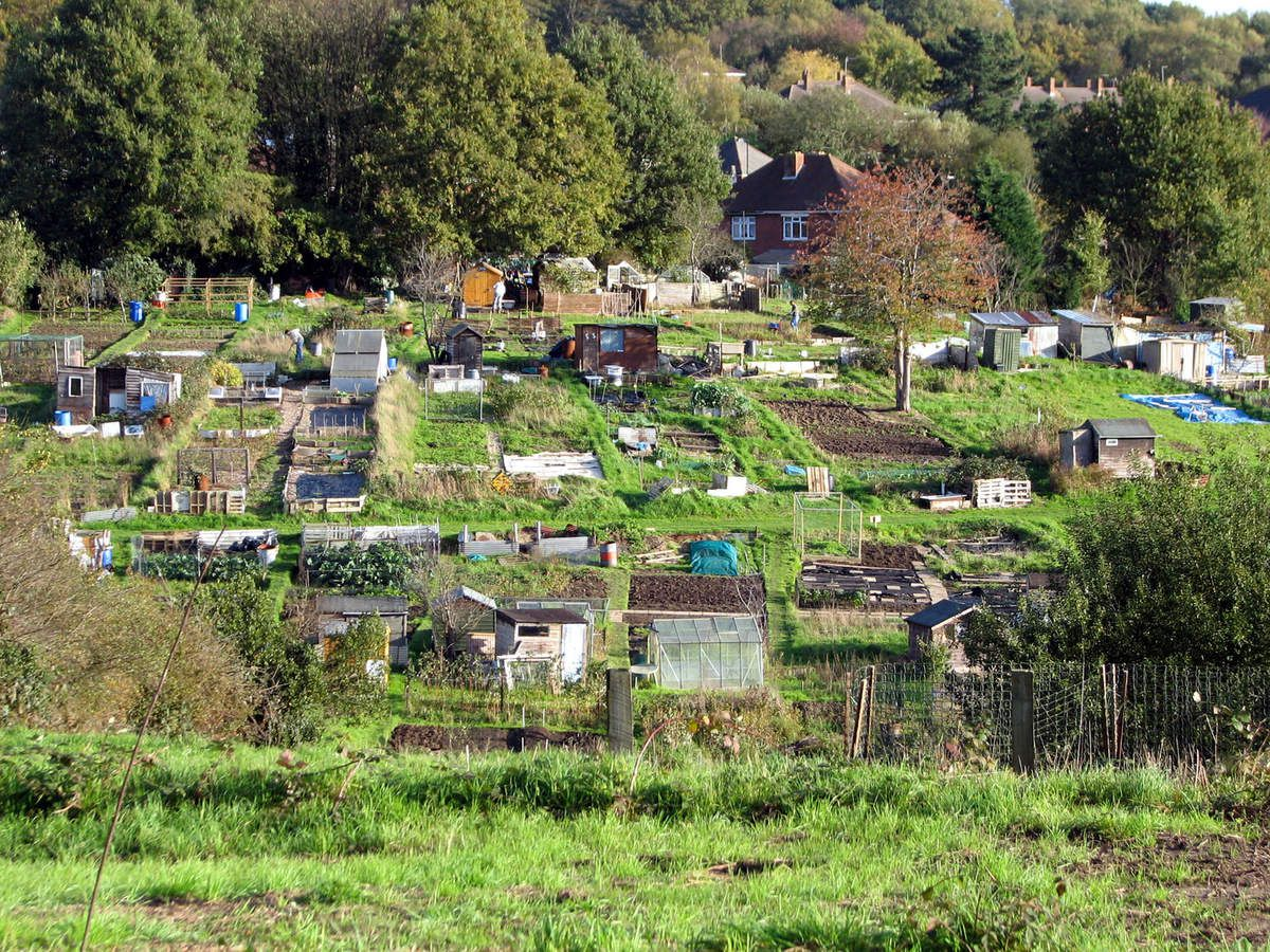 Allotments : photo  Roo Reynolds