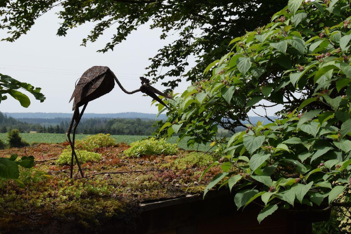 Le toit végétalisé de la cabane et les prairies sauvages sont fréquentés par de drôles d'oiseaux.