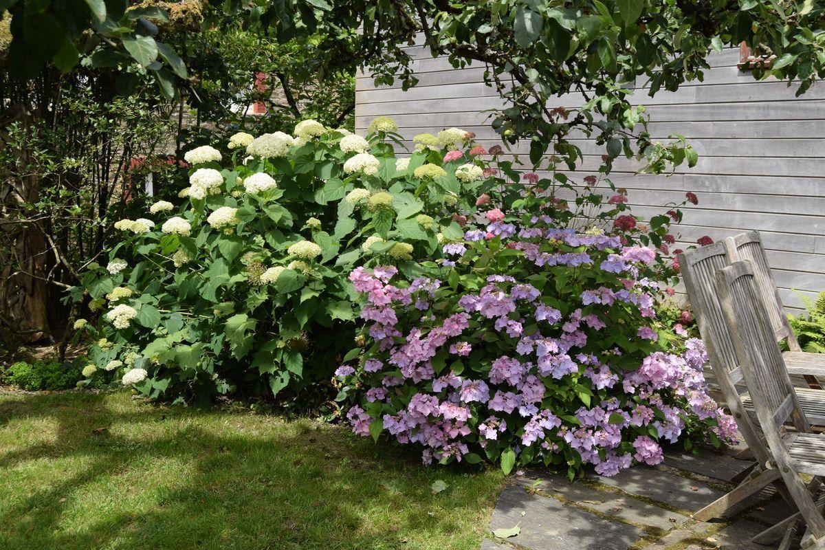 Le jardin du Bouillon Blanc à Sensenruth