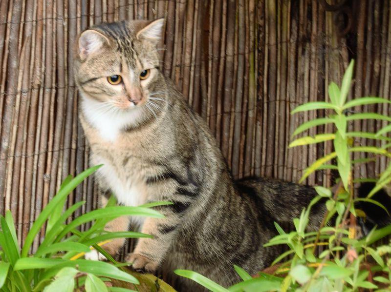 Le chat des quatre moineaux Nana