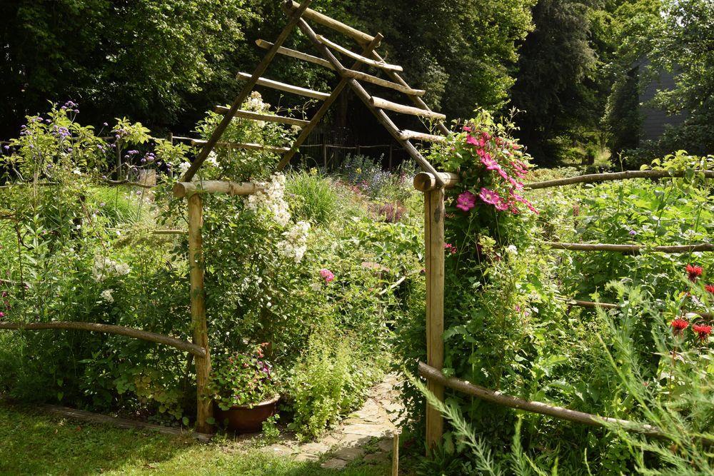 Journal de mon jardin, le 6 juillet 2020 : boutures etc...
