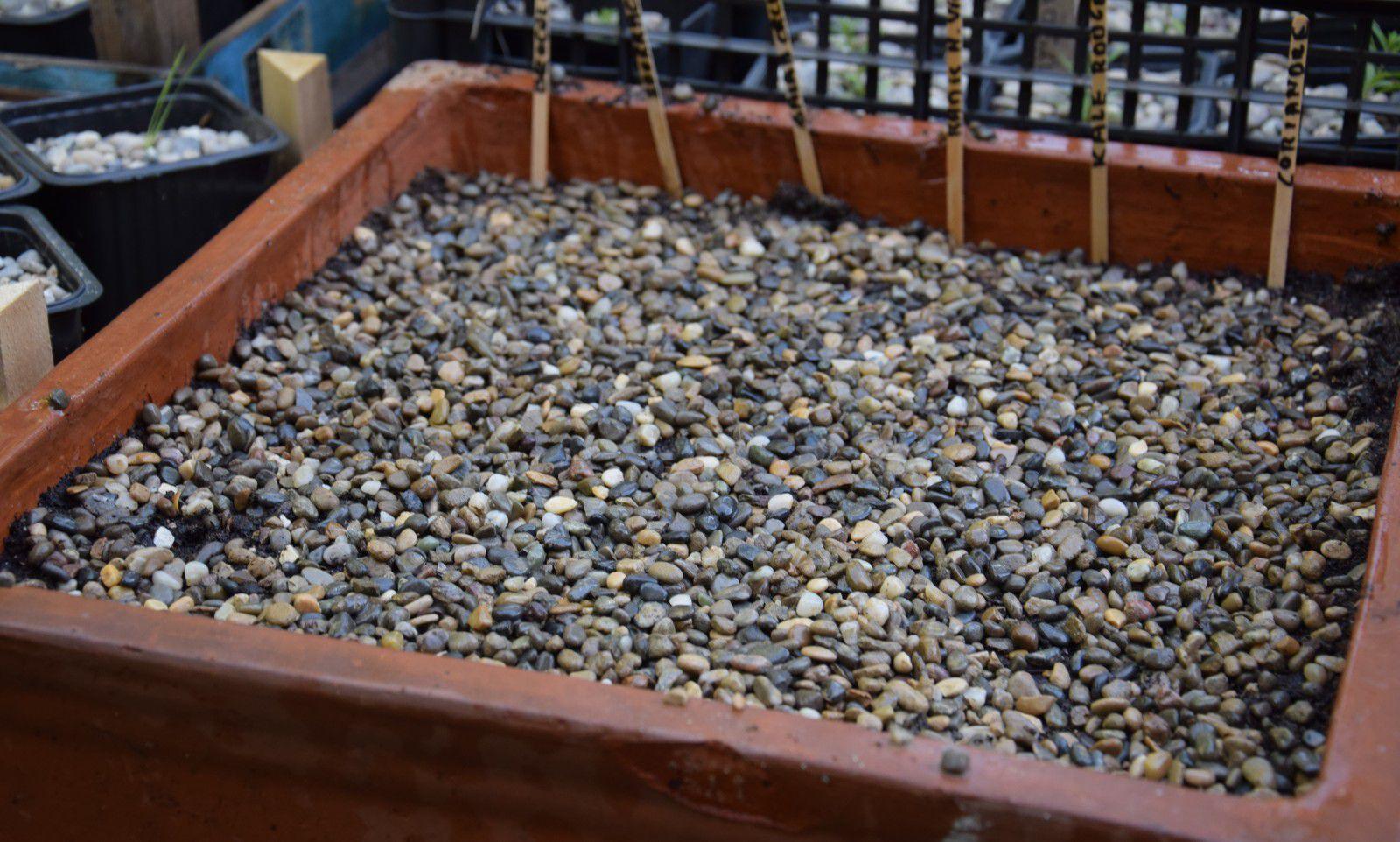 Journal du jardin, le 20 juillet : quelques petits semis pour le potager