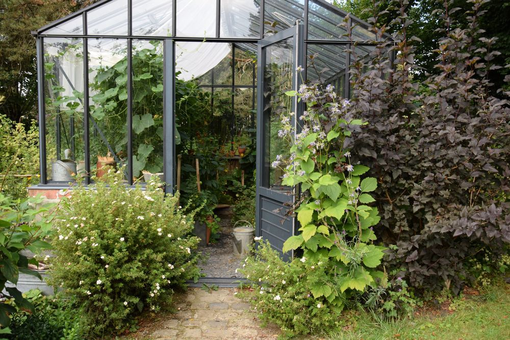 De gauche à droite : des potentilles arbustives roses aux fleurs pâlies par le soleil, la clématite et un physocarpus que j'ai déjà taillé après la floraison et que je vais devoir retailler.