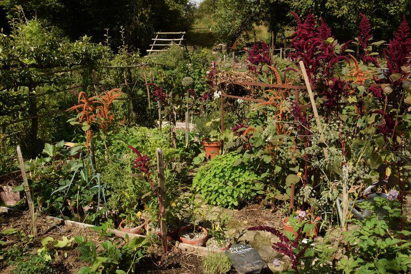 Journal du 28 août : nouveaux semis et récolte de graines