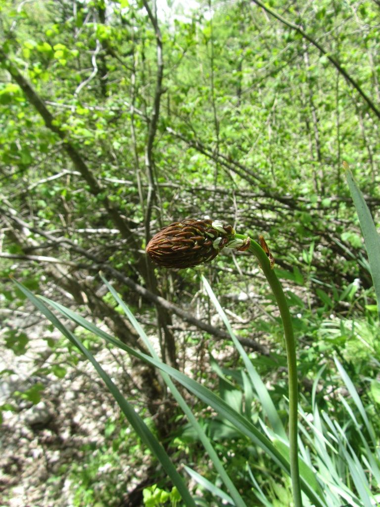 La Cascade de la Pisse - Chateauroux - Mai 2016