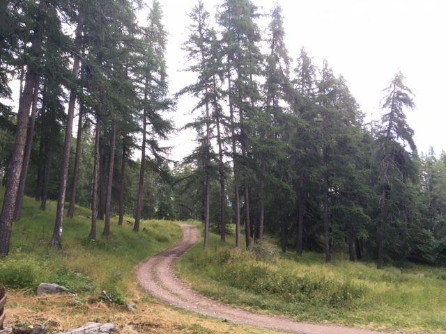 La forêt du Mont Guillaume. (Photo MF)