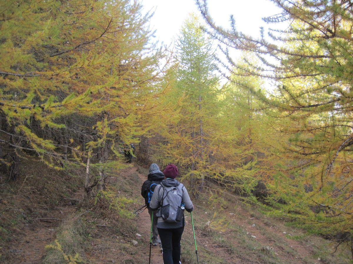 Les forêts de mélèze ont revêtu leurs couleurs automnales. (Photo MF)