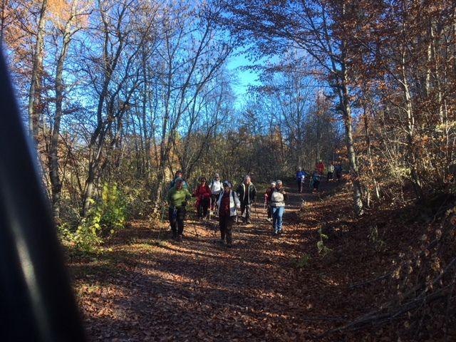 Dans la forêt de Saint Jean. (Photo MF)