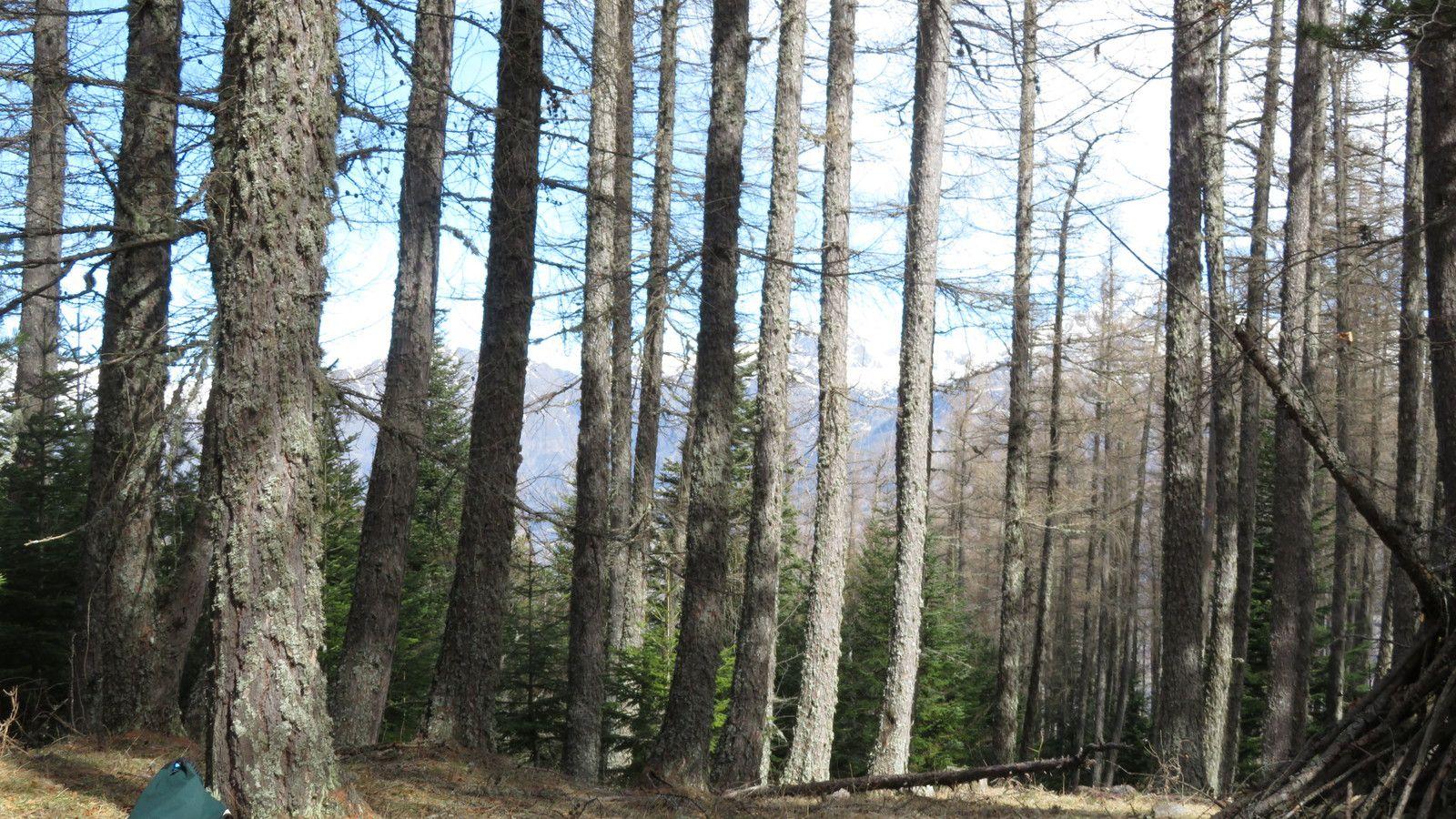 Une très belle forêt. (Photo MF)