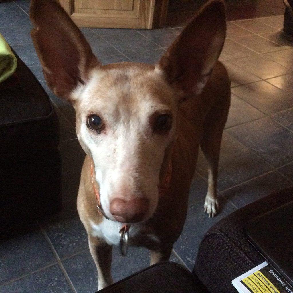 Tobi-les-grandes-oreilles