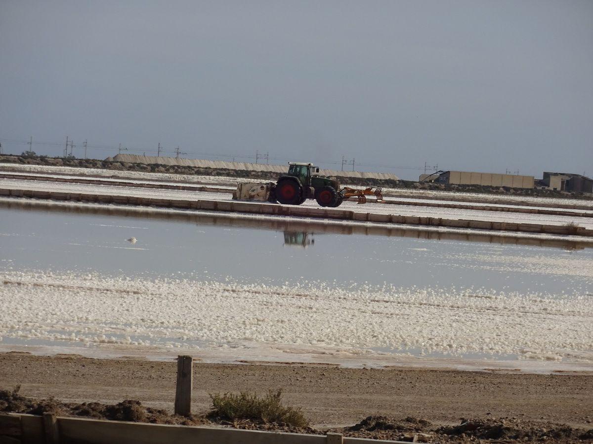 Salines de la Palme. Recolte du sel . Site Touristique.