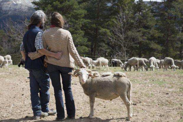Loi et cause animale : Les animaux ont-ils des droits ?