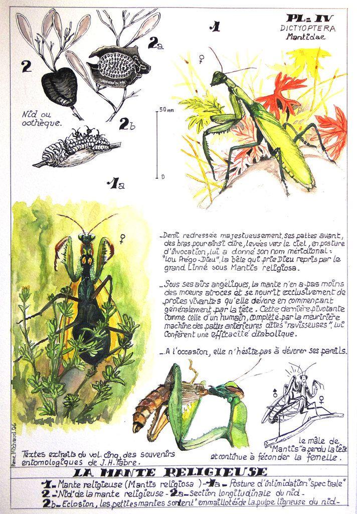 Illustration : René Michaud (Cliquez pour agrandir)