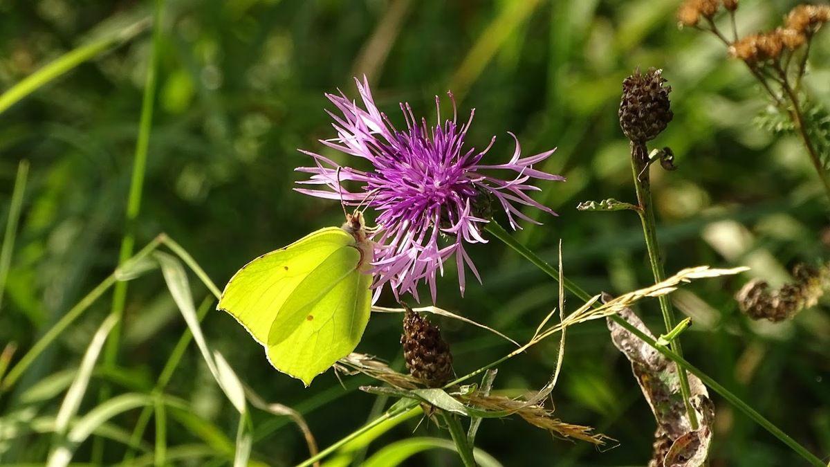 Une saison avec les papillons