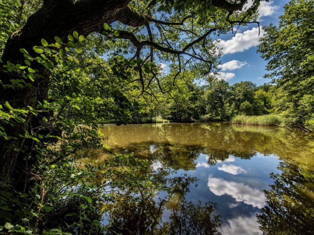 Le massif est parcouru d'étangs et de mares d'une grande richesse biologique. Photo : Franck Vardon (Cliquez pour agrandir)